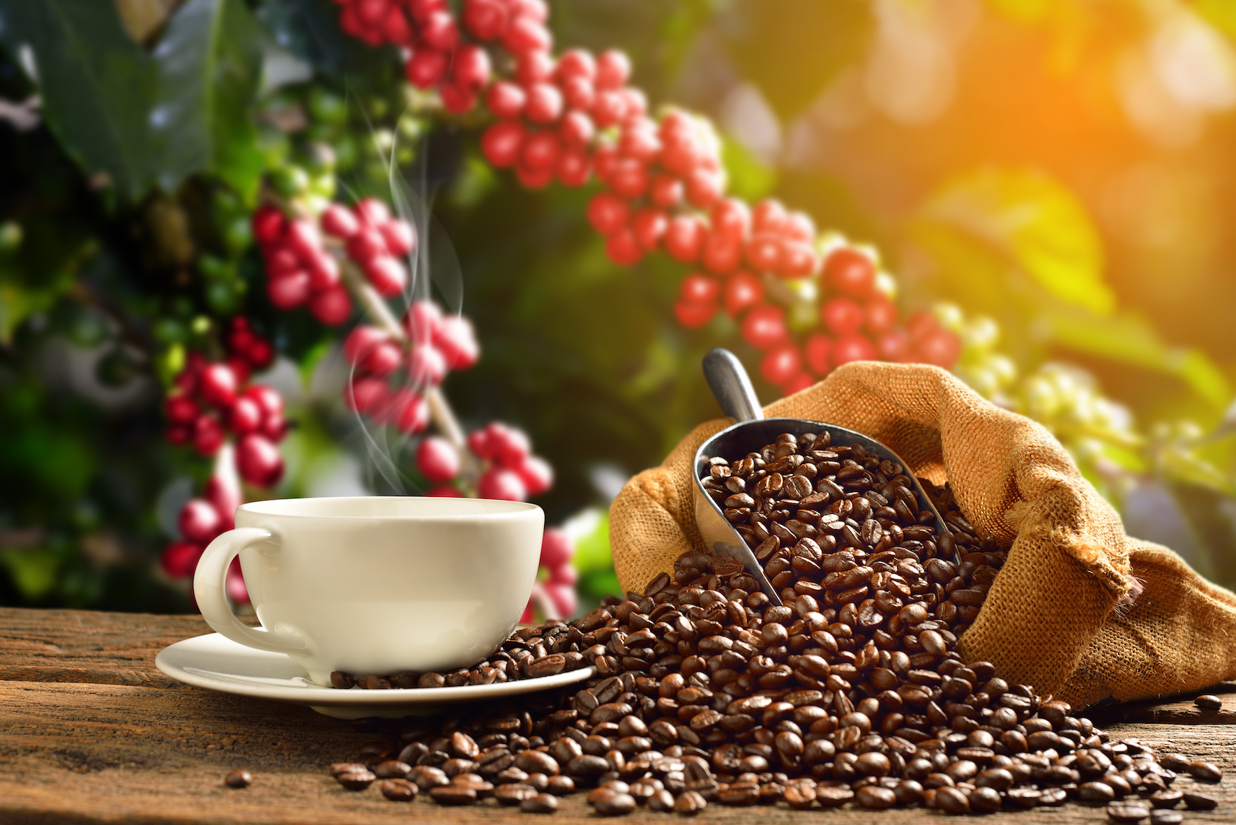 Wissenswertes: Eine kleine Reise durch die köstliche Welt des Kaffees