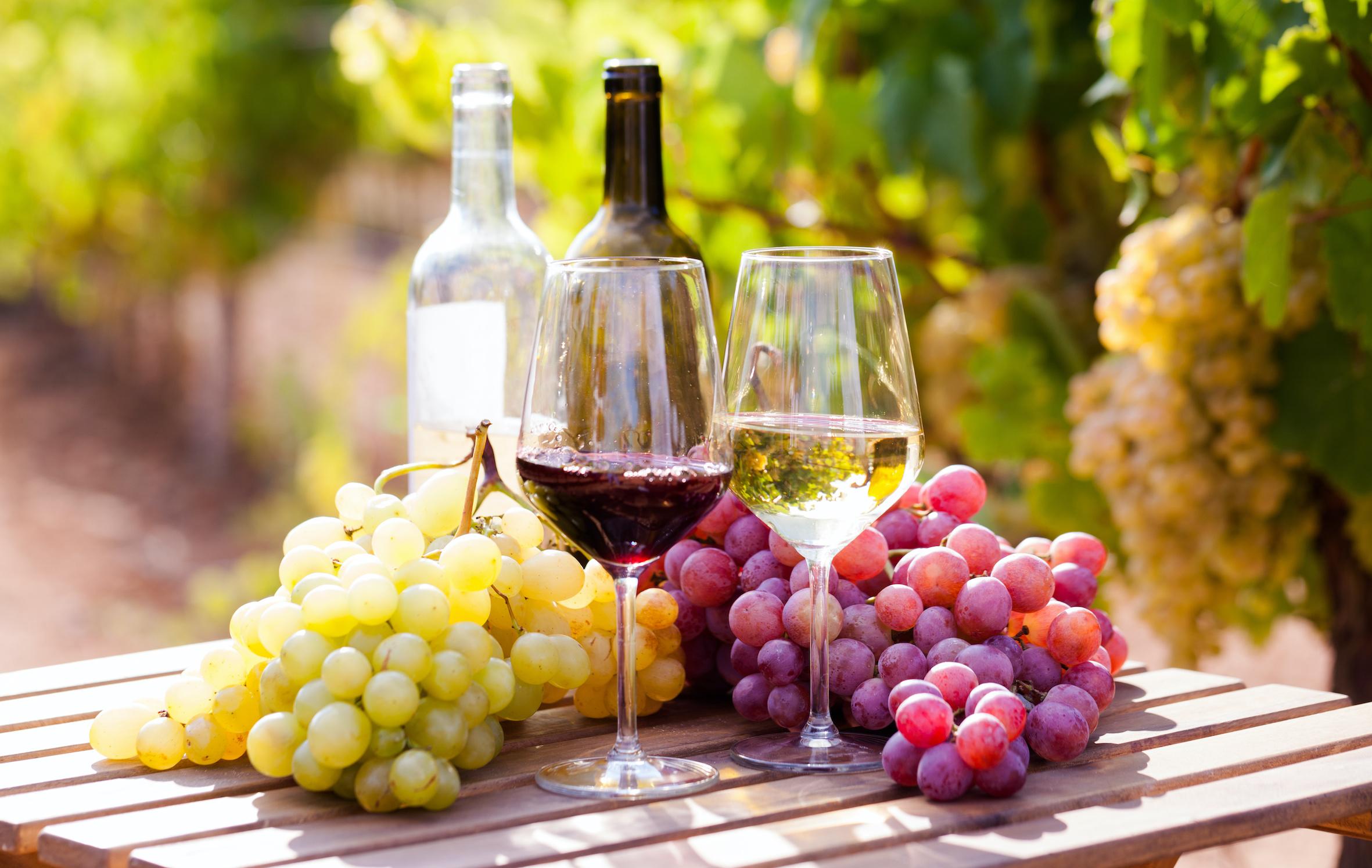 Wissen über Wein: 10 spannende und kuriose Fakten über den Rebensaft!
