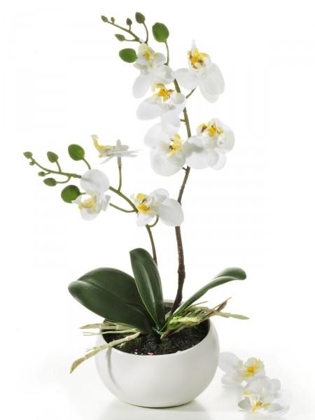 "Orchidee ""Aurelia"""