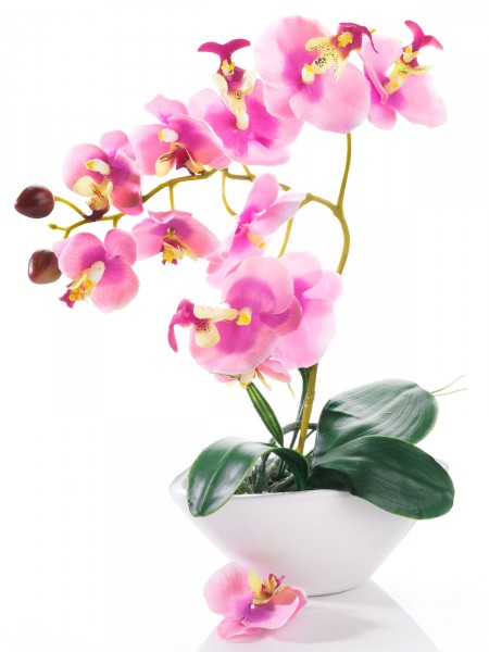 Orchidee, rosa