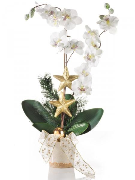 """Weihnachtsorchidee """"Natalia"""""""