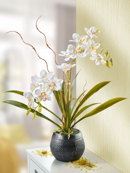 "Orchidee ""Luxus"""