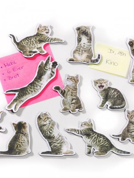 Katzen-Magnete