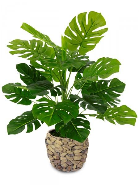 Philodendron mit Topf aus Wasserhyazinthe