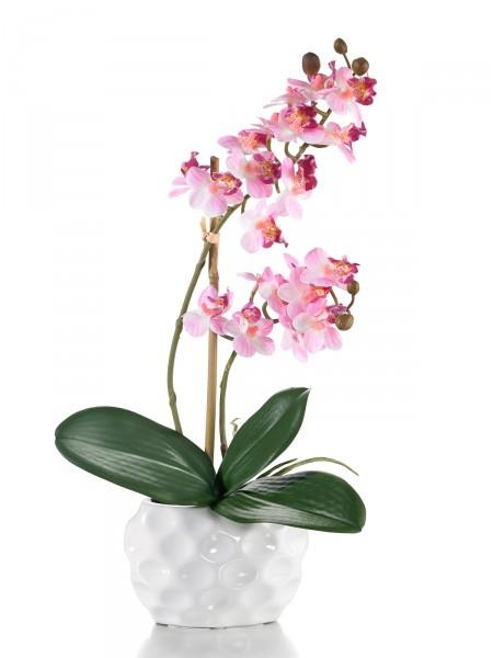 "Orchidee ""Viktoria"""