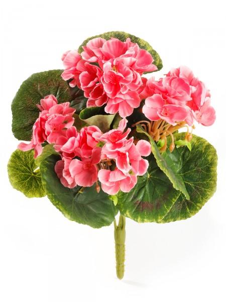 Mini-Geranienpick, rosa