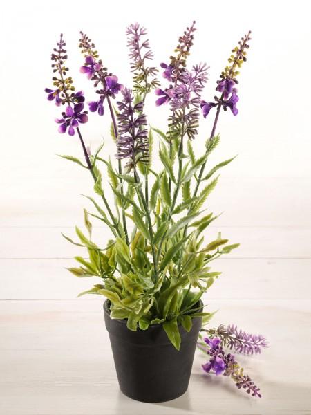 Lavendel-Topf