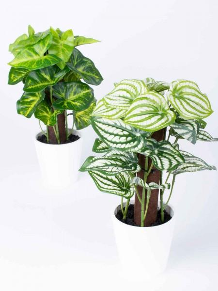 Grünpflanzen-Mix-Duo