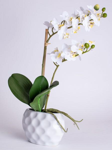 """Orchideentraum """"Annabelle"""""""