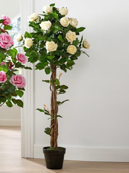 Rosenbäumchen