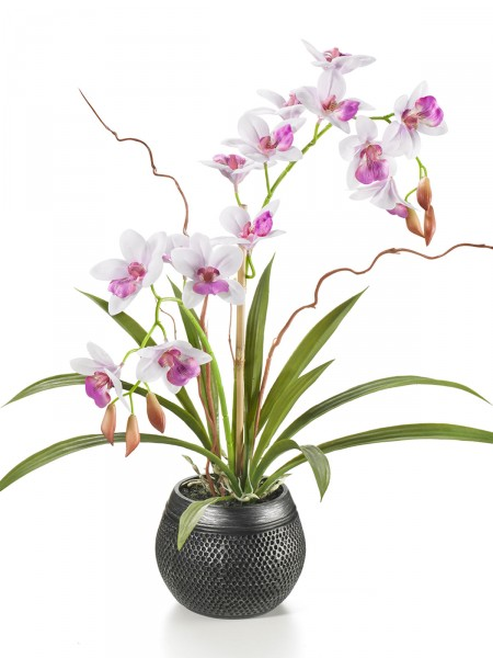 "Orchidee ""Asia"""