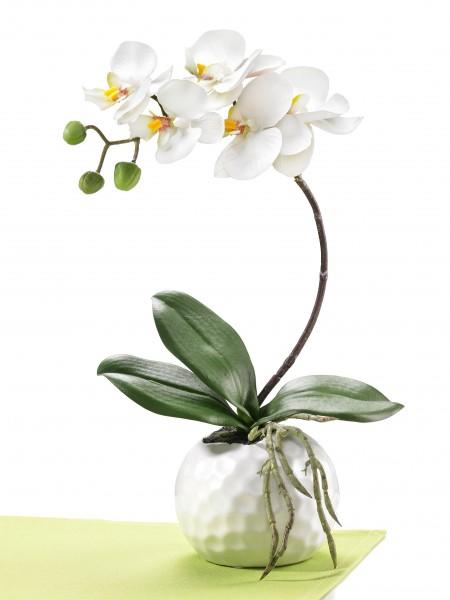 "Orchidee ""Gala"""