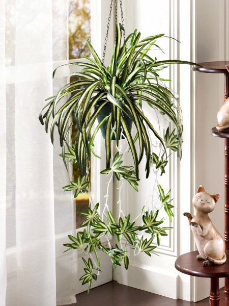 Wasserlilien-Ampel