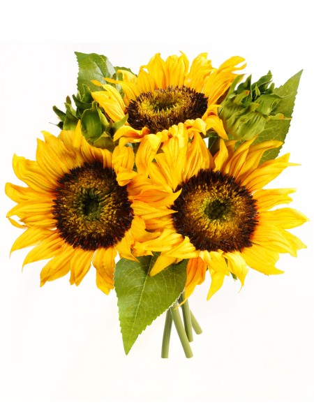 Sonnenblumenbouqet