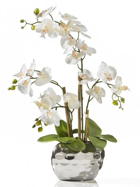 """Orchidee """"de Luxe"""""""